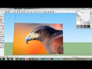 Easy to make birds in sketch up
