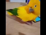 happy bird (Music The Beach Boys - Wouldn't It Be Nice)