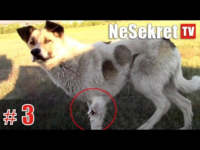 Спасение 3. Собака со сломанной лапой. Часть 1. Смотрите до конца! 18