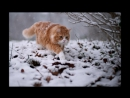 Л.П.Питерская -Приключения Рыжего кота и Златовласки17г. часть 1 автор Л.П.Питерская,муз сопровождение С.Чигадаев