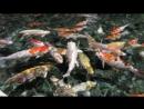 Сочинский океанариум, мы в Адлере 2017