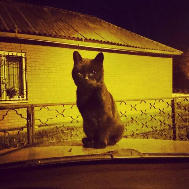 Чёрный кот бесплатно mp3