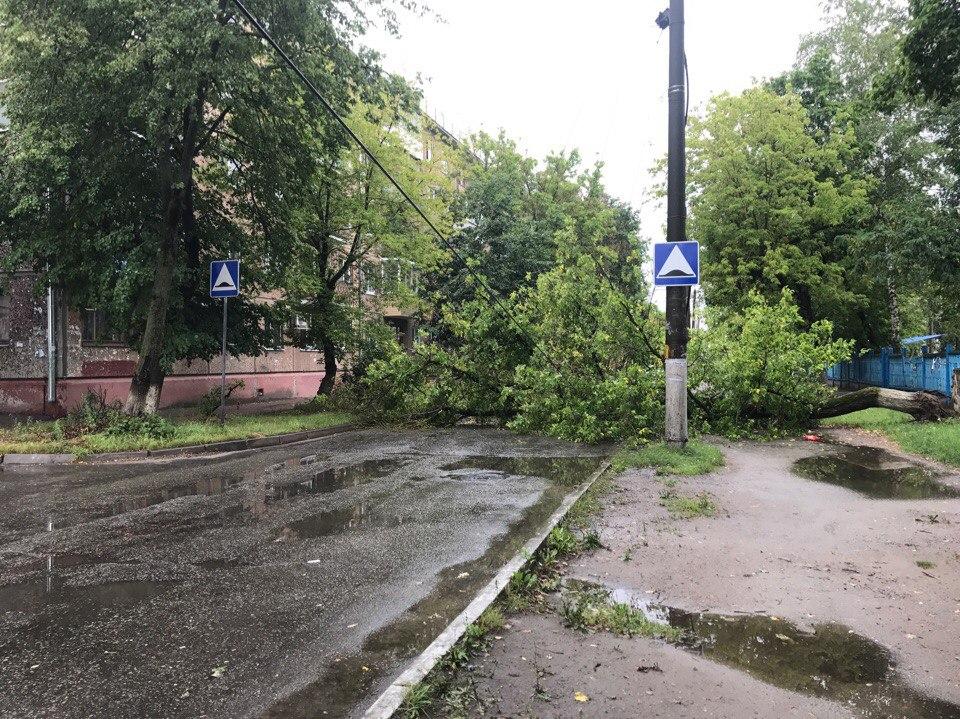 В Брянске возле детсада на улице Камозина рухнувшее дерево перекрыло движение