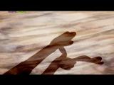 Знаешь как я люблю тебя Серия 35. Игры с тенью mult-karapuz.com