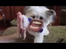 Если бы у животных был рот как у людей