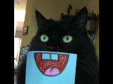 Приколы с котами 2017 ТОПовая Подборка Лучшие Приколы С Котами Funny Cats Complation 2017