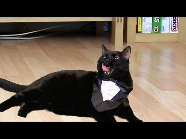 Psy - Oppa Gangnam Style - Preppy Kitty Style