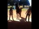 Танец с лошадкой