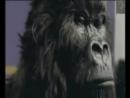 смешная реклама фестиваля Каннские львы