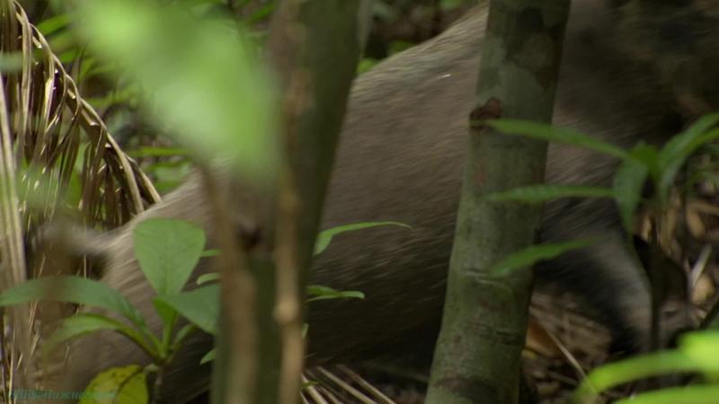 BBC «В краю муссонов (3). Засуха» (Познавательный, природа, путешествие, 2014)