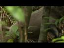 BBC В краю муссонов 3 Засуха Познавательный природа путешествие 2014