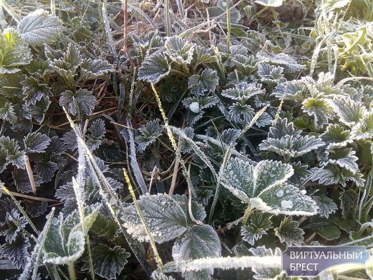 Температура в Беларуси 16 апреля была на 1-5 градусов ниже климатической нормы