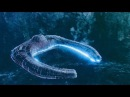 В России обнаружили внеземной объект на дне моря?