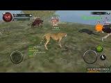 Wild animals onlinezebra squad