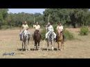 Pedro Torres Dressage Working Equitation