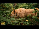 Pansonic GH5 42.5mm f/1.2 Cute foxlike dog explores autumn forest
