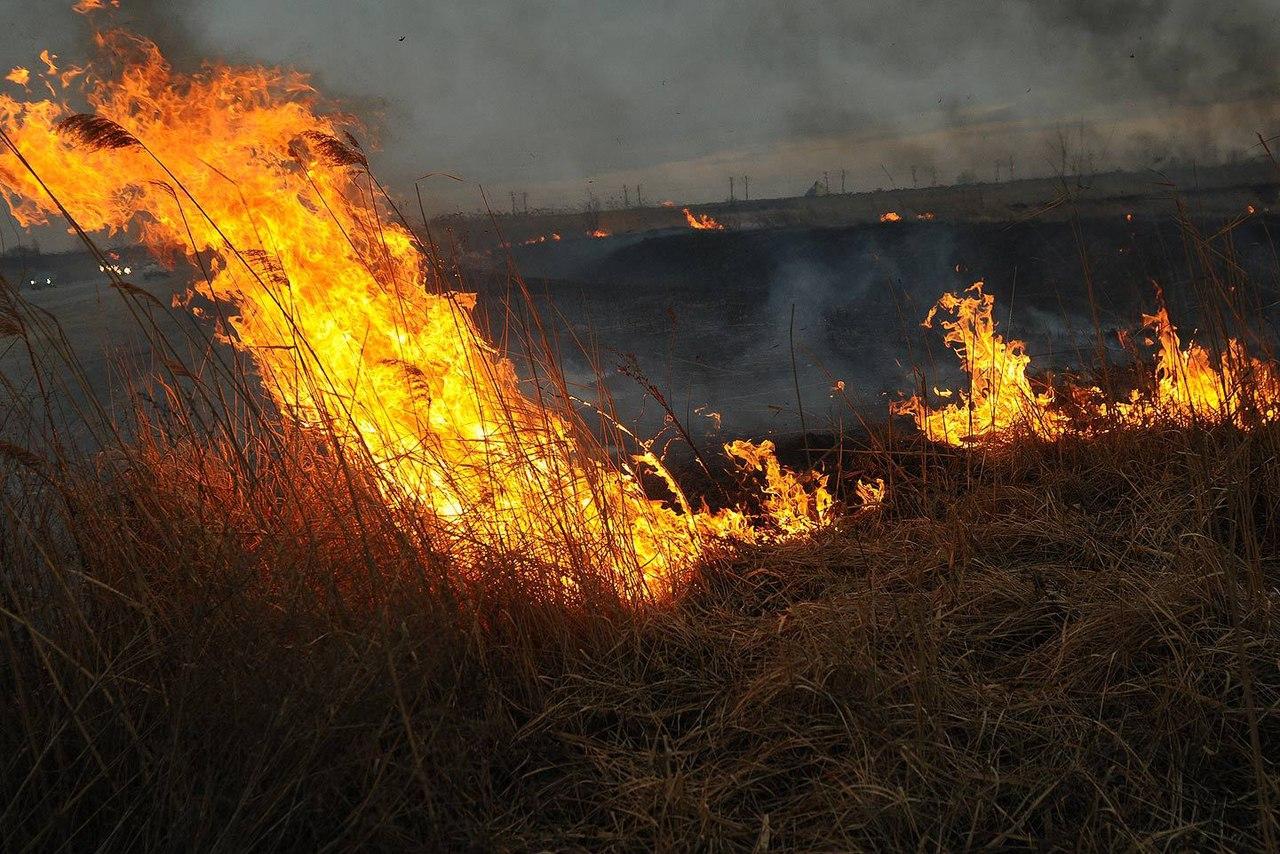 Штормовое предупреждение от донского МЧС: Сильные дожди и пожароопасность (5 класс)