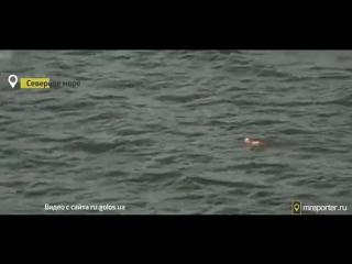 Чудесное спасение собаки в Северном море!