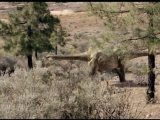 Прогулки с Динозаврами. Земля ГигантовWalking with Dinosaurs. Land of Giants