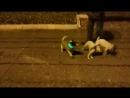 Ночные собачьи бои.mp4