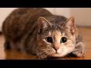Смешные кошки Funny cats
