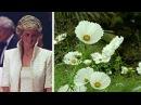 В память о Диане сад Кенсингтонского дворца усыпали белые цветы (новости)
