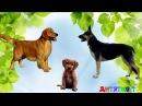 Домашние Животные и их детеныши Учим животных Развивающие мультики для самых маленьких Для детей ви