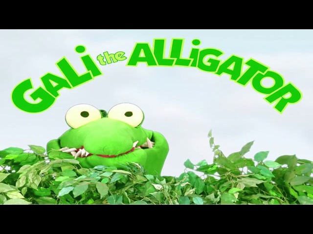 Gali the alligator