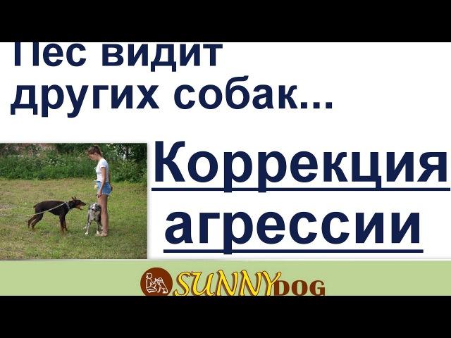 видит других собак коррекция агрессия