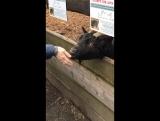 Мини-зоопарк в Карловых Варах