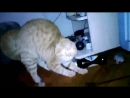 Кот со светящимися глазамиper funny video with animals (3)