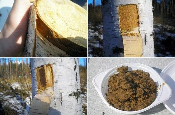 Готовим кашу из дерева