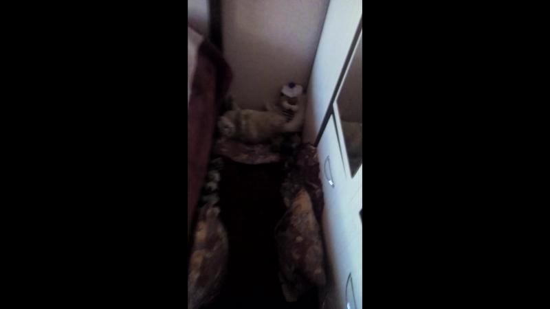 4 часть видео в комнате Коханко Ксении