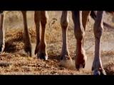 Твои весёлые друзья-зверята - 30 серия - Антилопа Гну Уилбур
