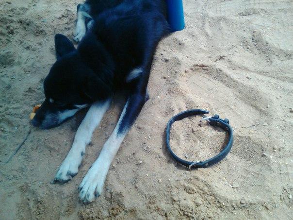 Здравствуйте в городе Дмитров рядом со Стадионом Локомотив нашли собак