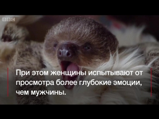 Любите смотреть видео про животных?