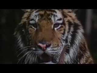 Тайны темных джунглей 2 серия