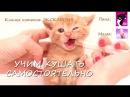 ПРОСТОЙ способ научить котенка КУШАТЬ САМОСТОЯТЕЛЬНО: Первый прикорм котят Фанты и Афродиты