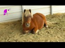 My Little Farrah Pony - Sunday With Sugar - Honeyheartsc Horses Pony Random Vlog