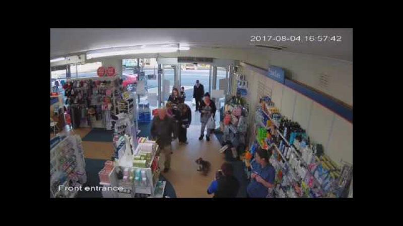 Koala Visits Pharmacy || ViralHog