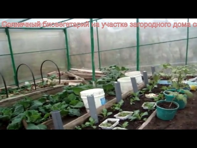 Солнечный биовегетарий своими руками овощи и фрукты круглый год