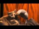 Кошка проносила наркотики в колонию )