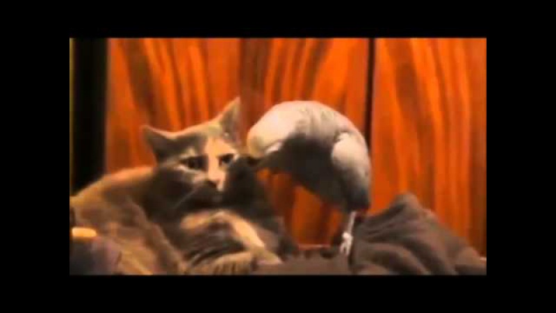 Кошка проносила наркотики в колонию)