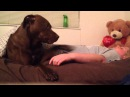 Service Dog alerting responding to Syncope (pass out spell)