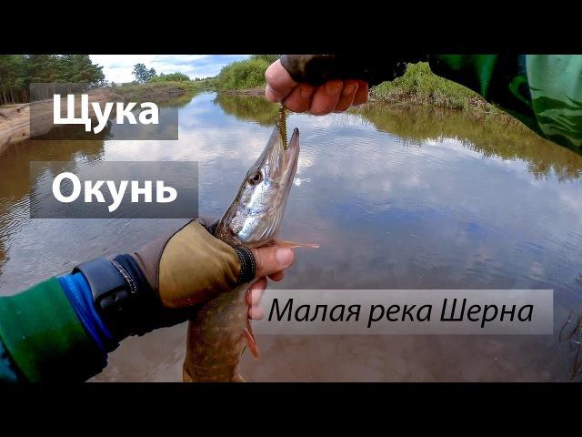 Река Шерна, Россия. По высокой воде и неактивному хищнику. Щука, окунь. 2017/07