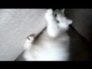мой кот бездельник
