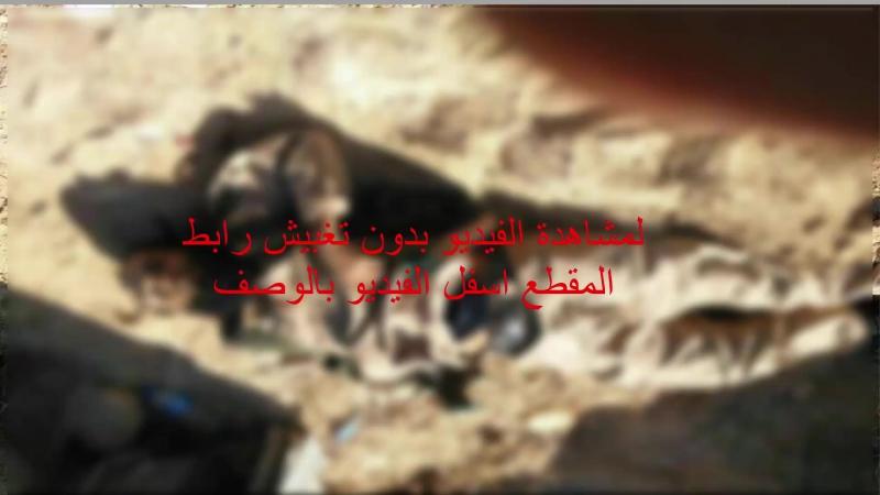 Сирия Syria Дохлые ДАИШ после неудачной попытки напасть на САА на участке дороги As Sukhnah Ash Sholah 29 09 2017
