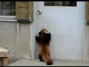 Да впустите же меня!