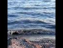 Родное море и такое любимое