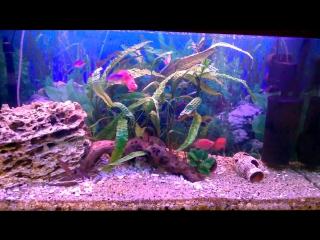 мой аквариум с попками!
